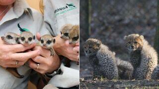 Journée mondiale des animaux : découvrez les bébés animaux les plus craquants (12 PHOTOS)