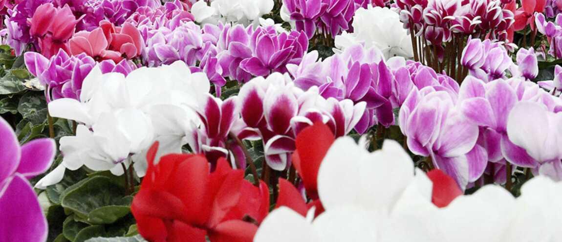 Décédé En 2012, Il Envoie Des Fleurs à Sa Fille à Chacun De Ses  Anniversaires