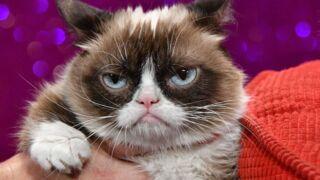 Que devient Grumpy Cat ?