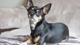 """La PETA verse 41 000 euros à une famille après avoir euthanasié son chien """"par erreur"""""""