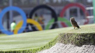 Jeux Olympiques : Caïmans, boas… Le parcours de golf est envahi par les animaux