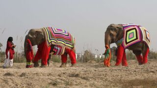 Insolite : elles tricotent des pulls pour... des éléphants
