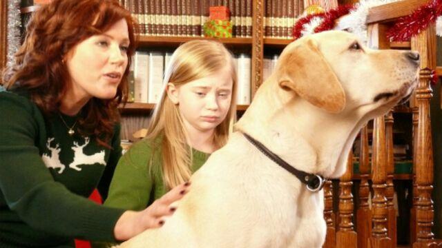 M6 prépare une télé-réalité : On a échangé nos chiens