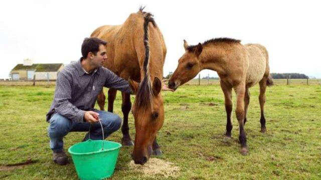 L'amour est dans le pré : Thomas contraint de vendre des chevaux
