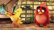Angry Birds le film : les oiseaux sont lâchés ! Découvrez la première bande-annonce du film (VIDEO)