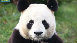 Une saison au zoo (France 4) : Découvrez les animaux extraordinaires des zoos français