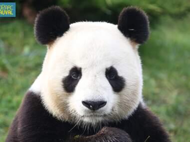 Une saison au zoo (France 4)  : les animaux les plus rares de nos zoos français