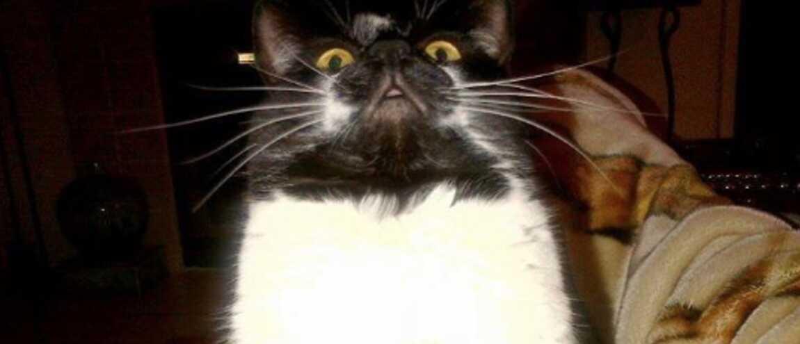 chatte noire le meilleur extrême Granny porno tube
