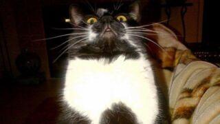 Cette chatte américaine fait le buzz à cause d'une étrange habitude...