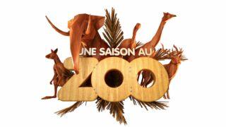 Une saison au zoo revient pour une cinquième édition sur France 4 le...