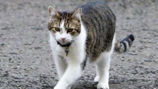 Larry, le chat du 10 Downing Street, reste en place, lui !
