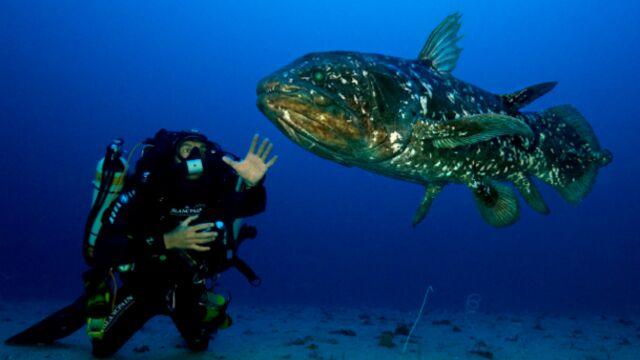 Programme TV : plongée avec le cœlacanthe sur Arte