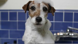 The Artist (Arte) : hommage à Uggie, le chien star du film avec Jean Dujardin (PHOTOS)