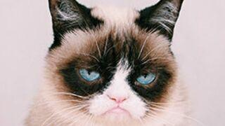Grumpy Cat : une première photo de son film dévoilée