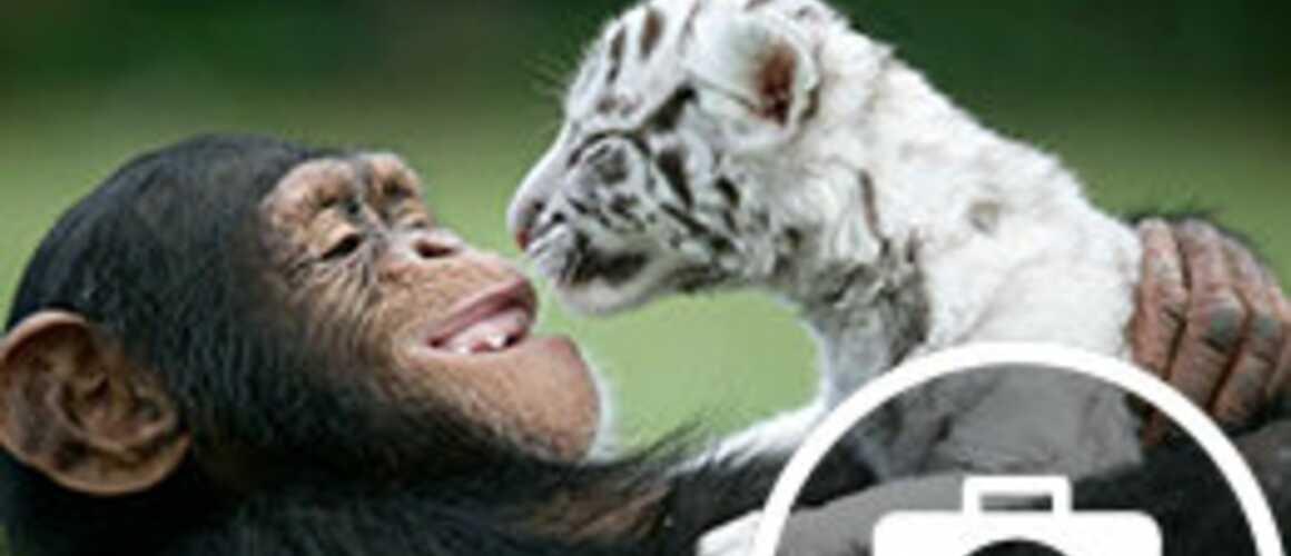 Ces improbables amiti s entre animaux trop mignon 10 - Des animaux trop mignon ...