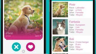 Adopte-moi : le Tinder pour chiens et chats débarque sur smartphones et tablettes