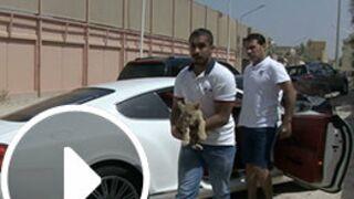 """Programme TV : on vous recommande """"66 minutes"""" (M6) : """"Koweit, un tigre dans mon salon"""" (VIDEO)"""