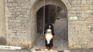 """Rémi Gaillard répond à la polémique causée par sa vidéo """"Dog"""""""