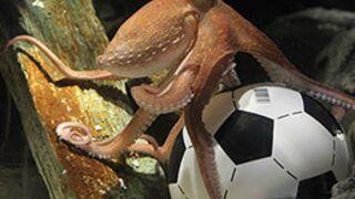 Coupe du monde 2014 : Paul le poulpe sera remplacé par…