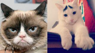 Ce sont les chats les plus mignons et les plus célèbres de la Toile (23 PHOTOS)