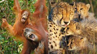 Le Livre de la jungle : Top 20 des animaux de la jungle les plus mignons (20 PHOTOS)