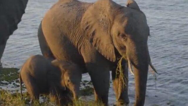 La Nuit des éléphants, un documentaire exceptionnel à découvrir sur France 2