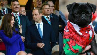 Insolite de la Coupe du monde de rugby : la famille royale aux premières loges et des supporters qui ont du chien ! (39 PHOTOS)