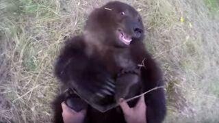 Il n'a pas peur de jouer avec un grizzli... Le Zapping web (VIDEO)