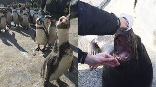 Otaries, lamantins, manchots... Dans la peau d'un soigneur du zoo de Vincennes ! (27 PHOTOS)