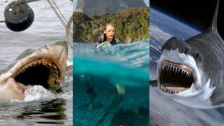 Instinct de survie (C8), Les dents de la mer, Sharknado… Quand les requins envahissent les écrans ! (31 PHOTOS)