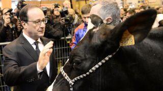 Salon de l'agriculture : 16 400 vins, 3 859 bêtes, 100 tonnes de foin, ça chiffre !