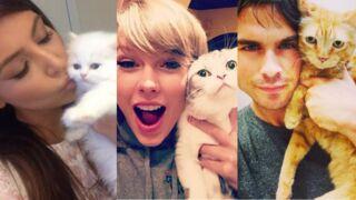 Kim Kardashian, Taylor Swift, Ian Somerhalder ... Découvrez les stars et leurs chats (27 PHOTOS)