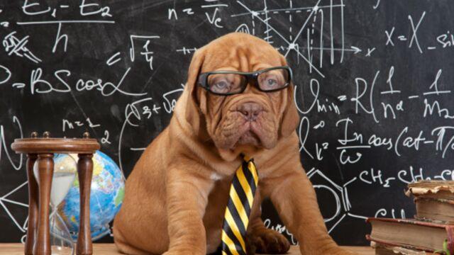 NRJ 12 prépare un talent-show avec des chiens