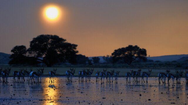 Arte filme la vie animale à l'aube
