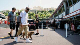 Lewis Hamilton : son chien Roscoe est accrédité sur les circuits de F1