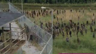 The Walking Dead : un teaser sous haute tension pour la saison 4 (VIDEO)