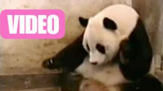 Vidéo : Tous les buzz du web en 4 minutes !