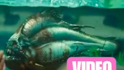 Piranha 3D : la terreur aquatique recommence ! (VIDEO)