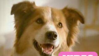 Une publicité rien que pour les chiens ! (VIDEO)