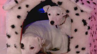 Un nouveau chien dans Une Famille en Or (Photos)