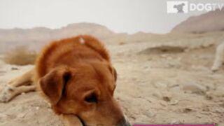 DogTV : Une chaîne télé pour les chiens ?  Oui, ça existe ! (VIDEO)