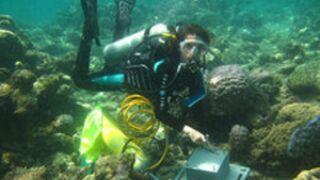 Programme TV : on vous recommande Quand les océans deviennent acides (Arte)