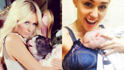 Paris Hilton, Mario Balotelli, Miley Cyrus... découvrez ces stars qui ont adopté un cochon ! (9 PHOTOS)