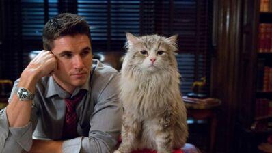 Ma vie de chat : top 5 des matous qui ont marqué le cinéma de leurs griffes