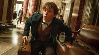 Les Animaux fantastiques : le spin-off d'Harry Potter sera proche de La coupe de feu