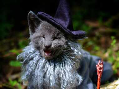 Game of Thrones, Star Wars, Le Seigneur des anneaux... les chatons geek !