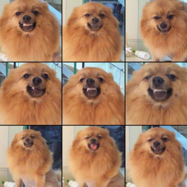 Hatchi, le chien de Perrie Edwards est mignon mais chelou.
