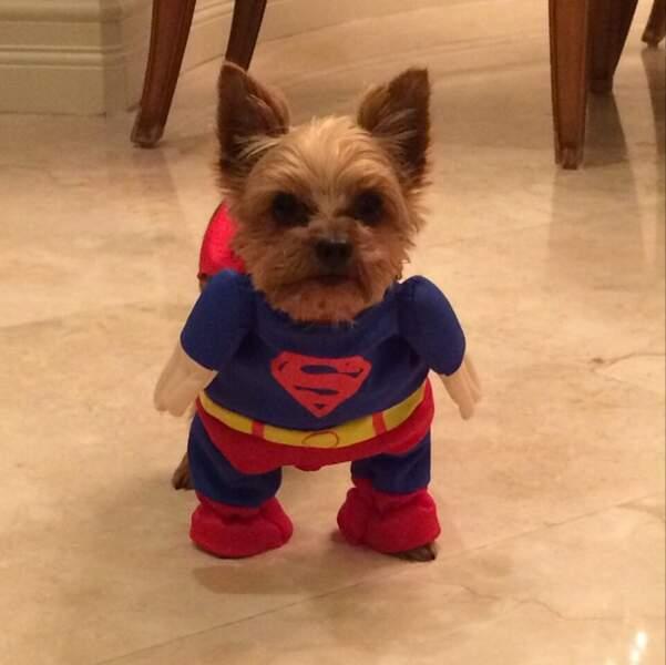 Et déguise son chien en Superman. ON A-DO-RE !