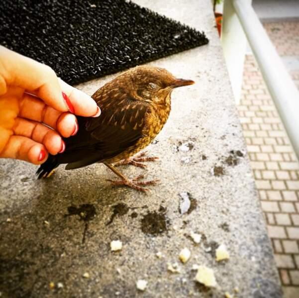 Parfois, elle sauve des oiseaux...