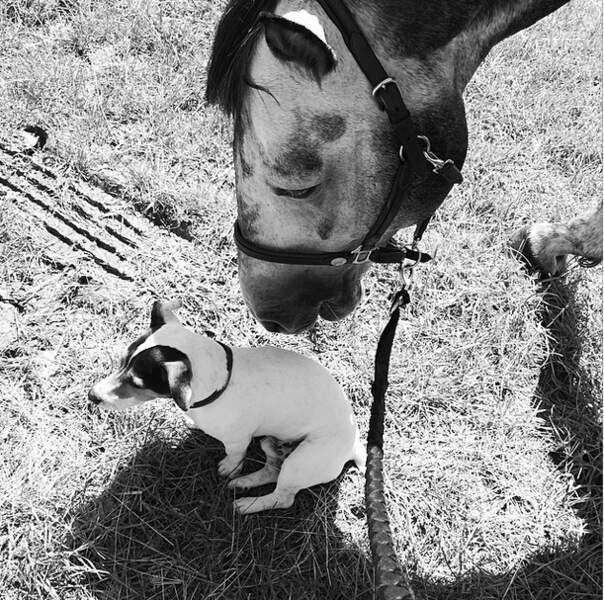 Le chien de Benjamin Castaldi sans-gêne. Trop mignon !
